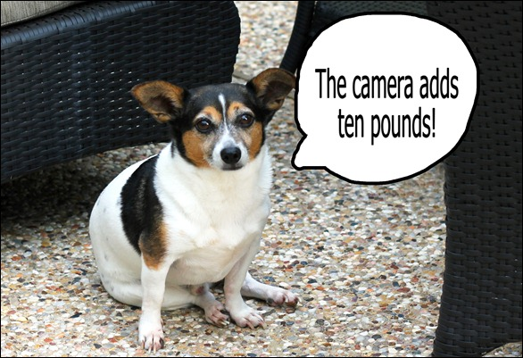 camera adds ten pounds